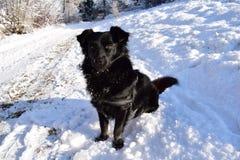 Czarny pies jest usytuowanym na białej drodze Fotografia Stock