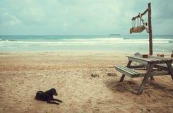 Czarny pies kłaść na ocean plaży z plenerową kawiarnią dla turystów obrazy royalty free