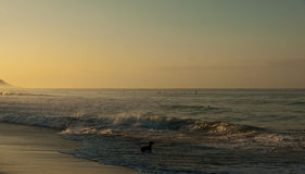 Czarny pies na plaży przy morzem w wieczór świetle Zdjęcie Royalty Free