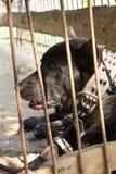 Czarny pies opuszczali w klatce. Obraz Royalty Free