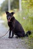 Czarny pies siedzi. Fotografia Stock