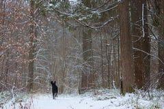 Czarny pies w lesie Fotografia Stock