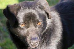 Czarny pies z ? obrazy royalty free