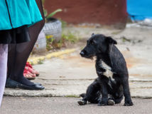 Czarny przybłąkany pies Zdjęcia Royalty Free