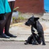 Czarny przybłąkany pies Obrazy Stock