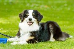 czarny psa biel Obrazy Royalty Free