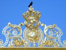 Czarny ptak - królewiątko świat obraz royalty free