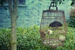 Czarny ptak przy ogródem Zdjęcie Royalty Free