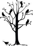 czarny ptaka drzewo Obraz Royalty Free