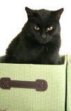 czarny pudełka kota zieleń Zdjęcia Royalty Free