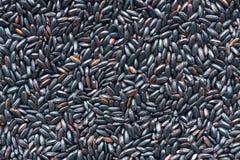 Czarny ryż obrazy stock