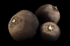Czarny rzodkwi warzywa zbliżenie Obrazy Royalty Free