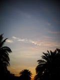 Czarny sylwetki drzewko palmowe opuszcza konturu zmierzchu czas Obraz Stock