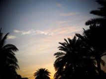 Czarny sylwetki drzewko palmowe opuszcza konturu zmierzchu czas Zdjęcie Royalty Free
