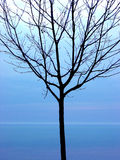 czarny sylwetki drzewo obraz royalty free
