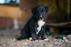 Czarny szczeniak Zdjęcie Royalty Free