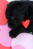 czarny szczeniak obraz stock