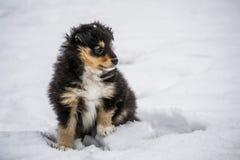 Czarny szczeniak w śniegu Obrazy Royalty Free