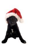 Czarny szczeniak z Bożenarodzeniowym kapeluszem obrazy stock
