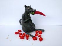 Czarny szczur z czerwonym chili i ketchupem odizolowywającymi na białym tle, Obraz Stock