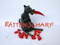 Czarny szczur z czerwonym chili, odizolowywającym na białym tle Obrazy Royalty Free