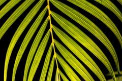 czarny tła liścia Zdjęcie Stock