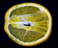 czarny tło pomarańcze zdjęcie stock