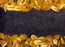 Czarny tło z żółtymi piórkami fotografia royalty free