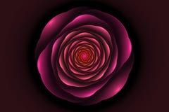 Czarny tło z menchii różą w centrum Kwiat tekstura, f Obrazy Stock