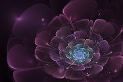 Czarny tło z purpurami i turkusem wzrastał w centrum S Zdjęcie Royalty Free