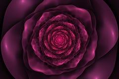 Czarny tło z zmiętą menchii różą w centrum Ślimakowaty f Zdjęcia Stock
