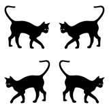 czarny tło koty Zdjęcia Royalty Free