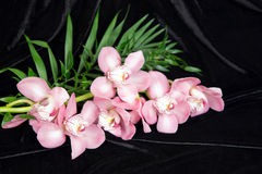 czarny tło orchidea Zdjęcia Stock