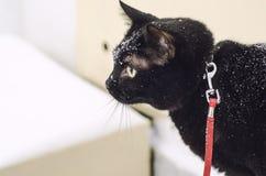 Czarny tomcat w śniegu zdjęcia stock