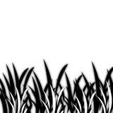 czarny trawy 01 white Obraz Stock
