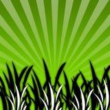 czarny trawy 07 white Zdjęcia Stock