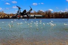 Czarny trutnia quadcopter z kamerą lata nad Seagulls lata nad jeziorem Zdjęcia Stock