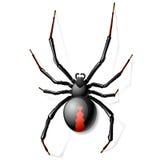 Czarny Wdowi pająk Fotografia Royalty Free