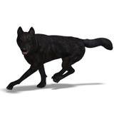 czarny wilk Zdjęcie Royalty Free