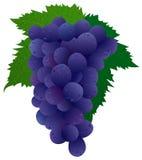 czarny winogron Obraz Royalty Free