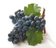 czarny winogrona Obraz Stock
