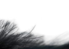 czarny zamknięta eleganci piórka fotografia zamknięty Obraz Stock