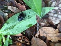 czarny zieleń Zdjęcie Royalty Free