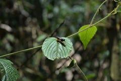 czarny zieleń Fotografia Stock