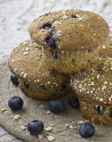 czarnych jagod muffins Fotografia Royalty Free