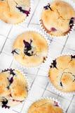 Czarnych jagod muffins Obraz Stock