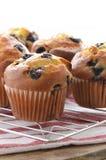 Czarnych jagod muffins Obraz Royalty Free