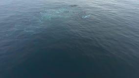 Czarnych wielorybów nur pod wodą Andreev zbiory