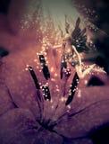 Czarodziejka i kwiat Zdjęcia Royalty Free
