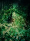 Czarodziejka w lesie ilustracji